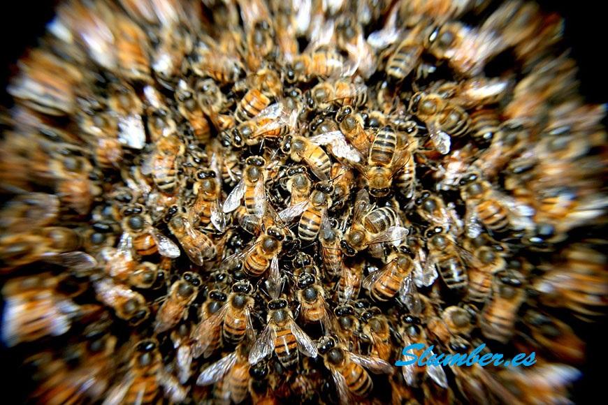 abejas en los sueños simbolismo