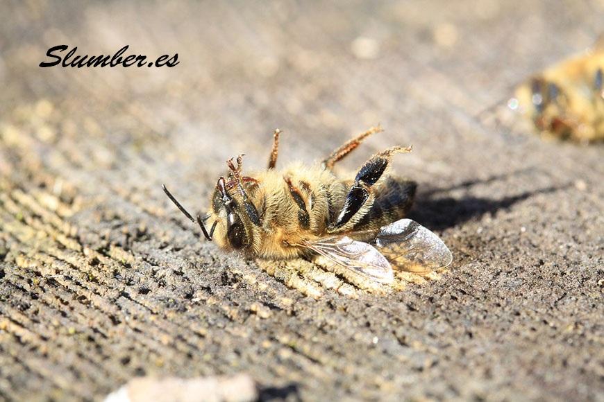 que significa soñar con una abeja muerta
