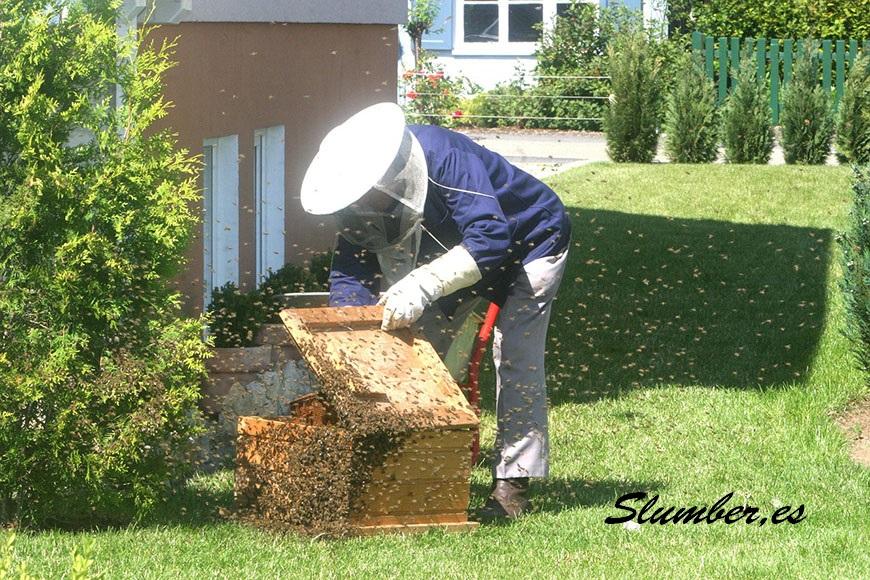 que significa soñar con muchas abejas