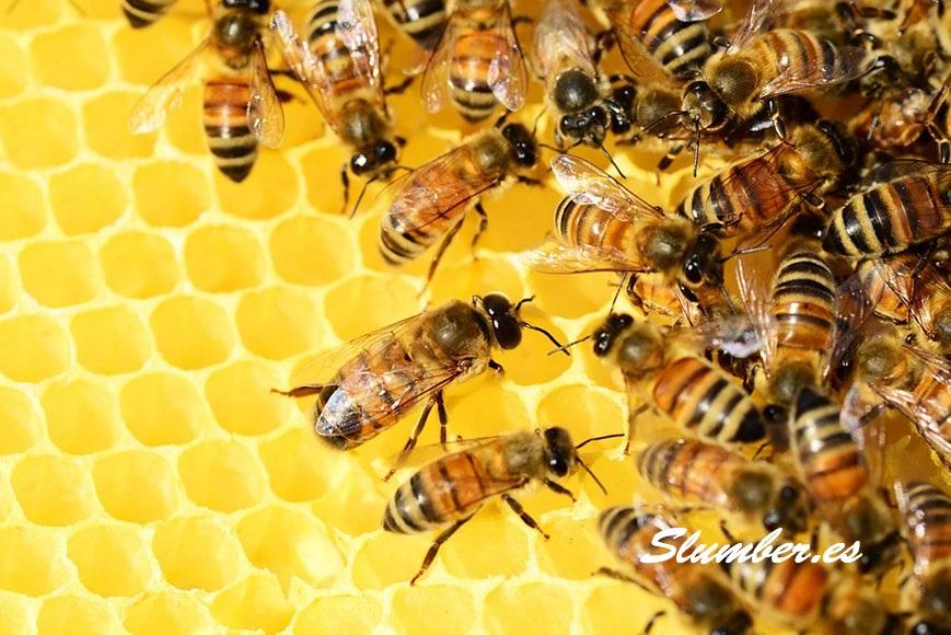 que significa soñar con abejas o miel