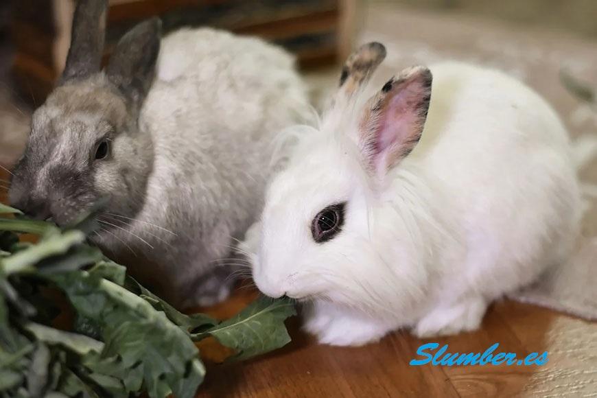 soñar con un conejo casero