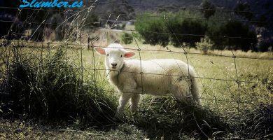Qué significa soñar con ovejas