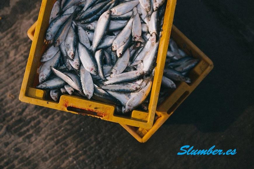 soñar con peces muerto simbolismo y significado
