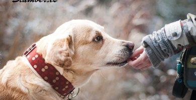 Qué significa soñar con perros