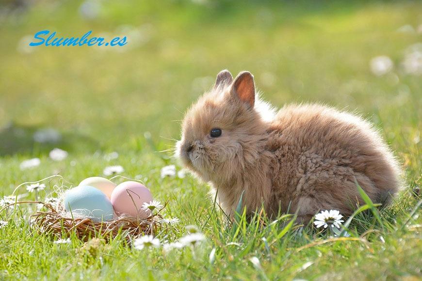que significa soñar con un conejo peludo