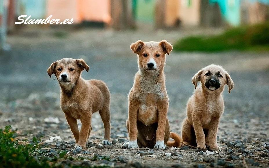 perros callejeros en tu sueño