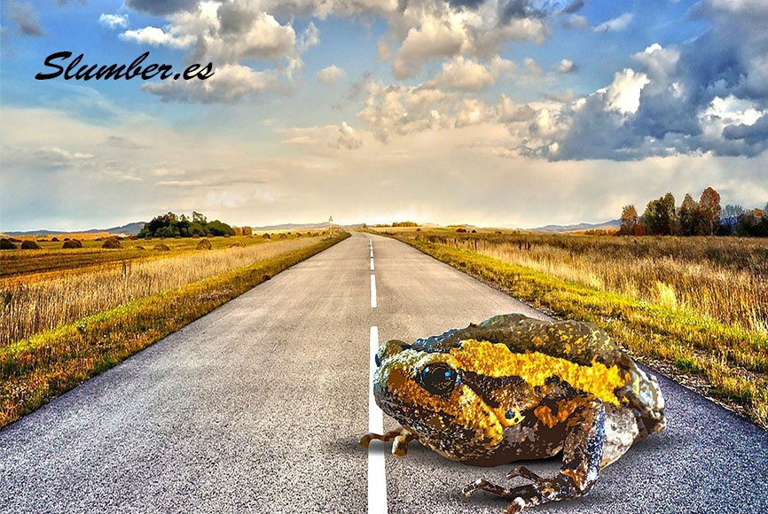 Qué significa soñar con ranas