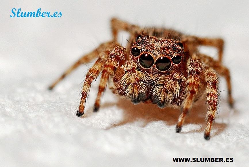 Qué significa soñar con arañas