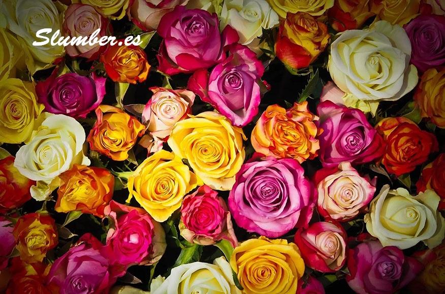 Qué significan soñar con rosas