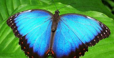 Qué significa soñar con mariposas